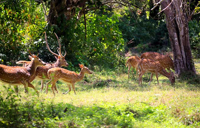 Morning safari in Wilpattu National Park