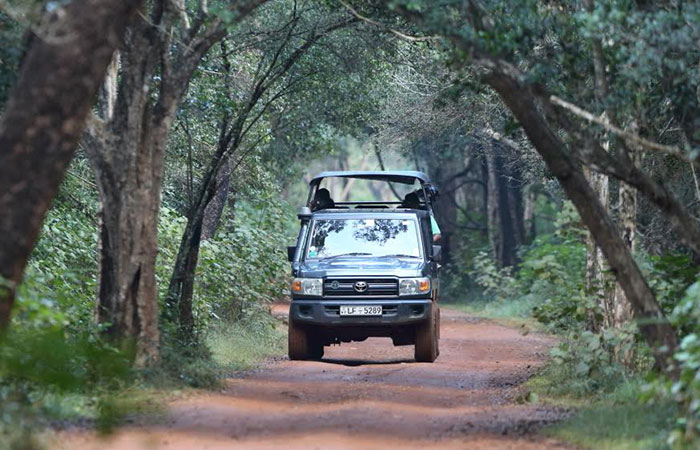 Wilpattu National Park Tented safari camping trip