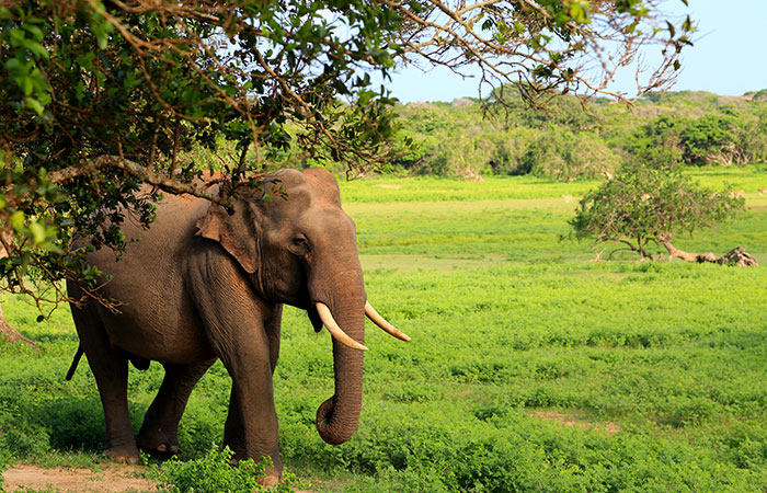 Yala National Park tented safari camping trip
