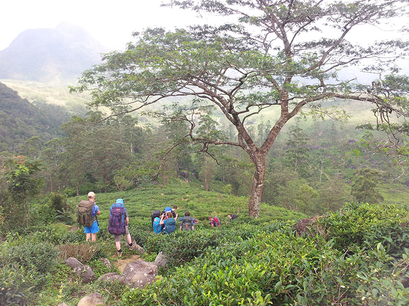 Full day trekking trip in the Knuckles Mountains