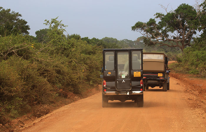 Afternoon safari in Yala National Park