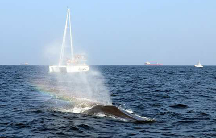 Whale Watching in Trinco