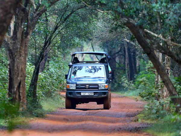 Wildlife Safaris in Sri Lanka
