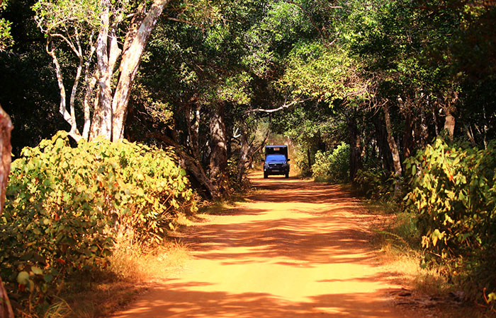 Wilpattu Leopard Safari Game Drive | wilpattu Jeep Safaris