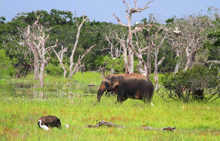 Yala National Park Safari Game drive