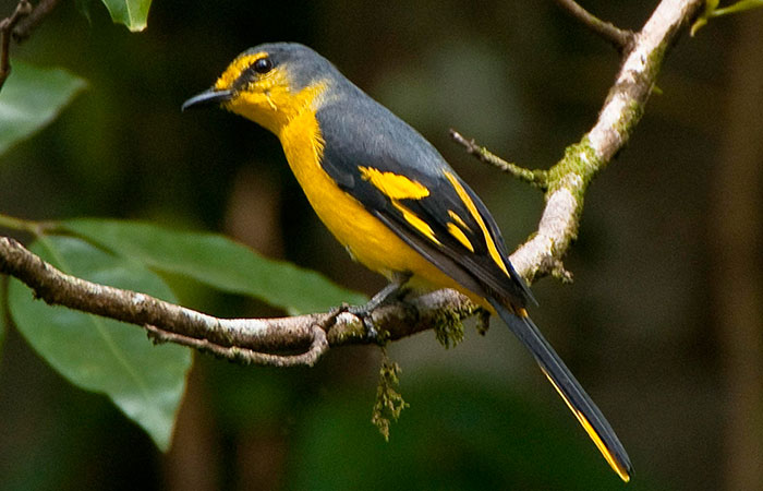 Bird watching in Kitulgala Rain Forest
