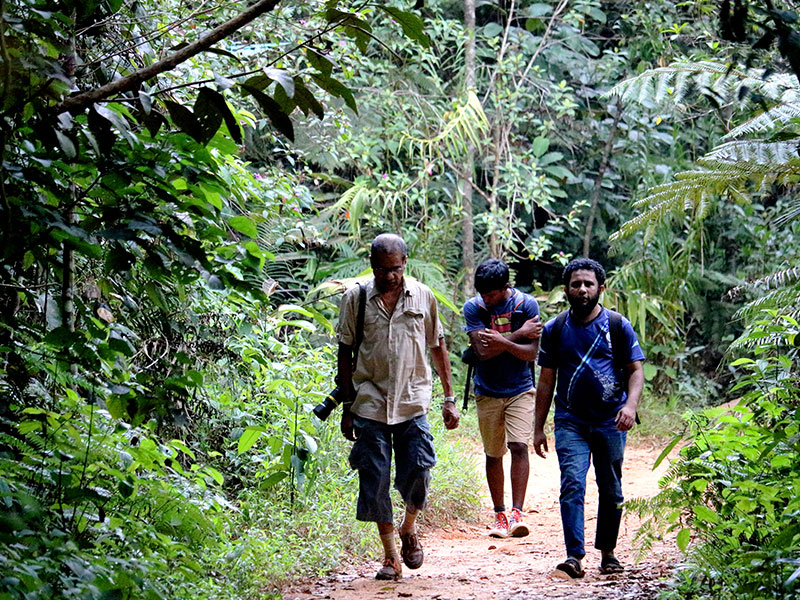 Sinharaja Rain Forest Walk and Bird Watching Day Tour