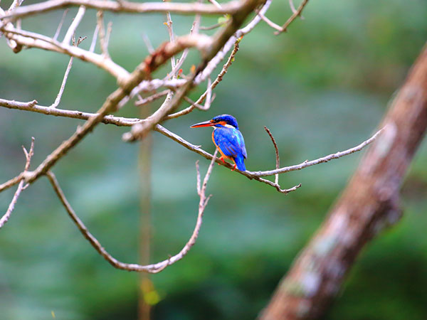 Sigiriya Bird Watching Tours | Bird Watching Tours in Sri Lanka | Bird watching in Sigiriya Sanctuary | Birds in Sigiriya Sanctuary